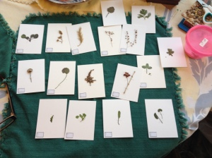 MiniatureHerbarium