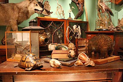 Skeletons-TaxidermiedAnimals