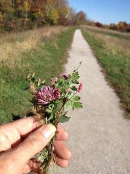 LateAutumnMiniatureFlowers-HickoryHills